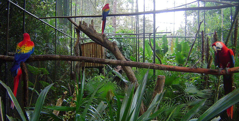 beautiful birds in a Belizean Zoo